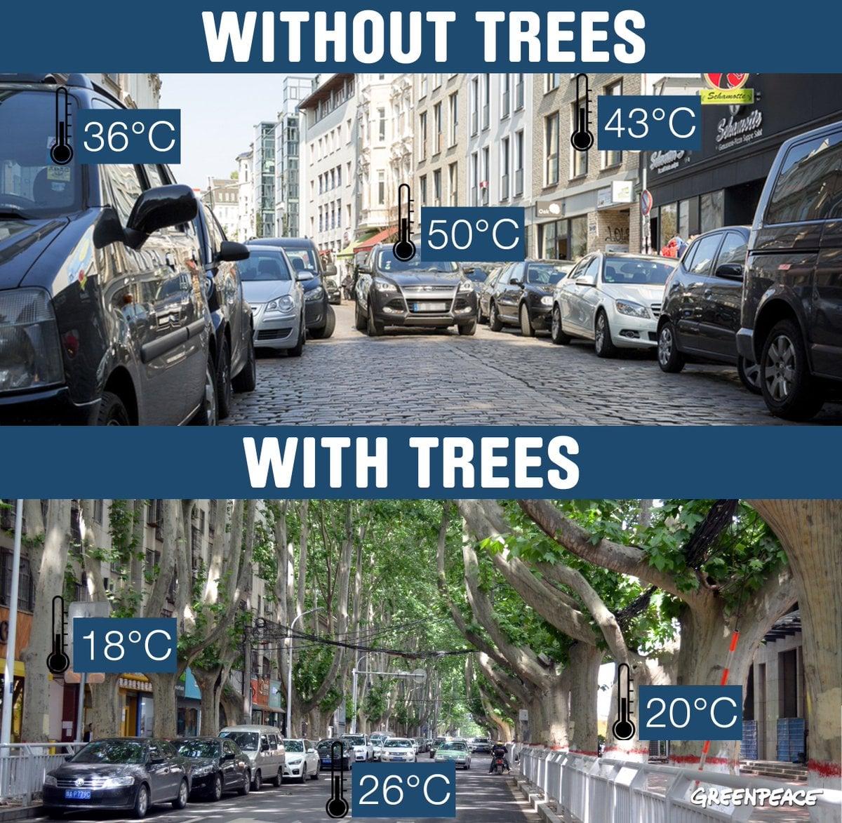 в тіні дерев набагато свіжіше та прохолодніше, ніж на розпеченій плитці чи асфальті