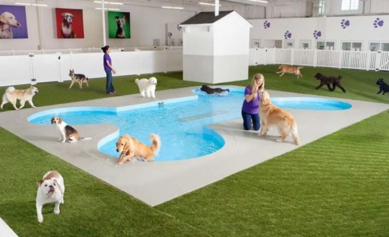 готель для собаки