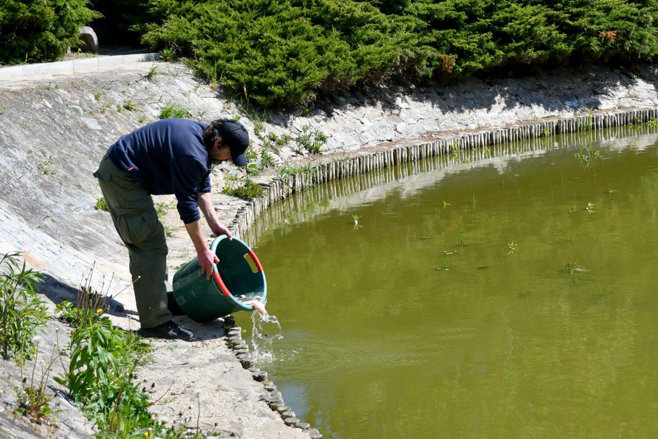 Зариблення водойм — один із способів боротьби з комарами у Вроцлаві