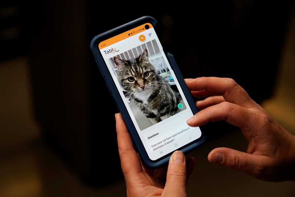 визначає настрій кішок