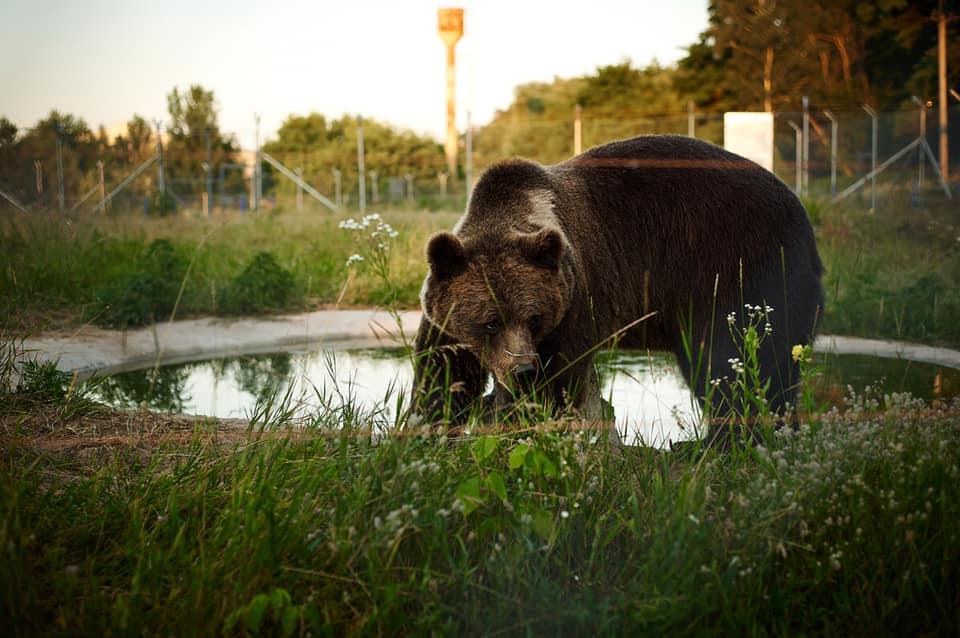 На Київщині відкрили притулок для ведмедів