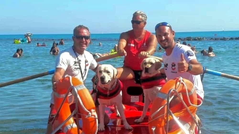 В Італії собаки врятували 14 людей