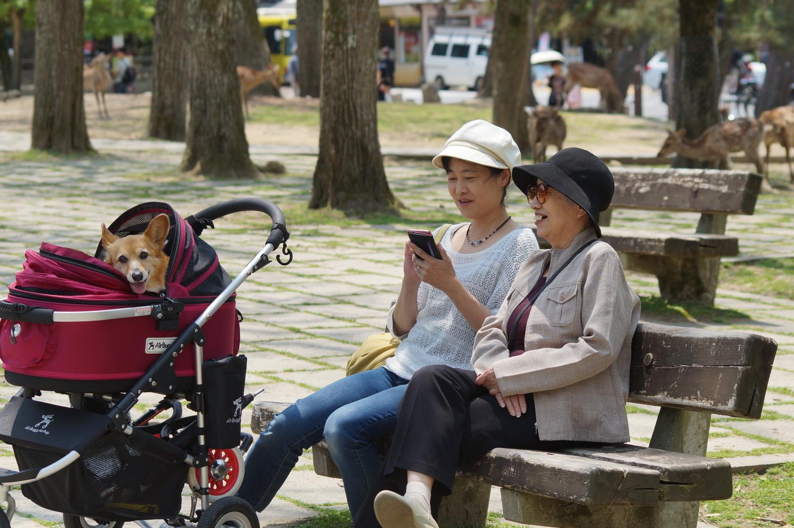Собачий перекладач та ідентифікатор носів: 20 рішень для чотирилапих, які вас здивують