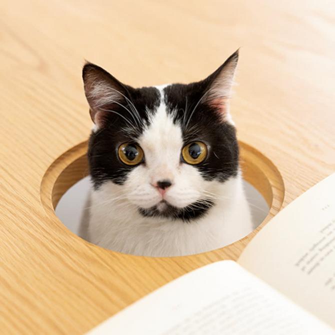 стіл для людей та їхніх котів