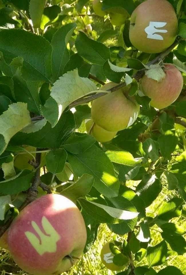 яблука із зображенням герба