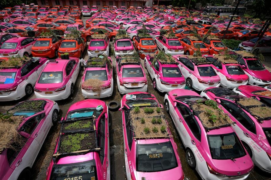 Збанкрутілі таксисти в Бангкоку розбили город на дахах машин