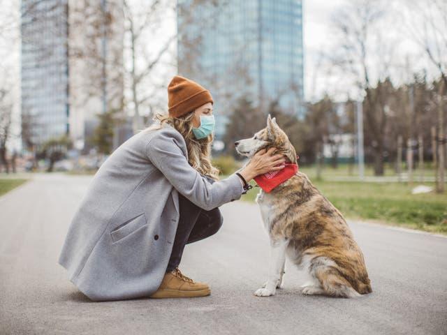 собака карантин