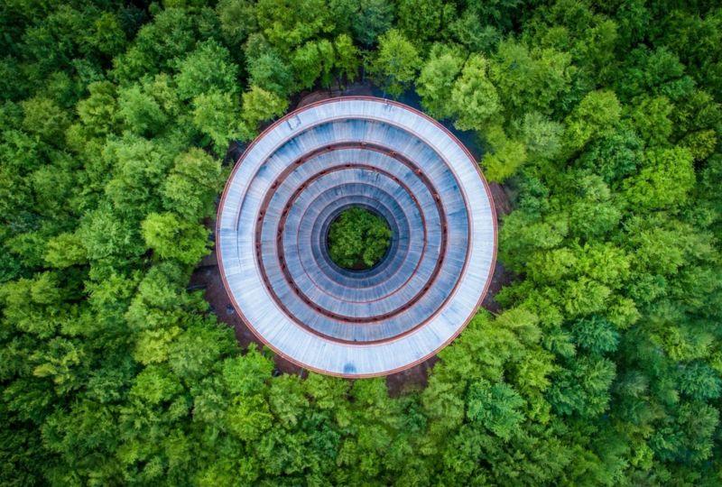 вежа, яка, здається, стоїть посеред лісу