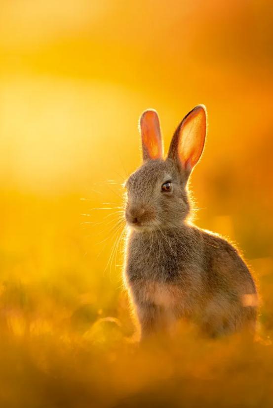 Самотній кролик у Річмонд -парку, Лондон
